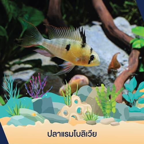 เลี้ยง ปลา คอน โด