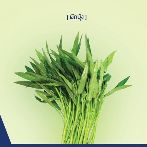 ปลูก ผัก คอน โด, ปลูก ผัก ใน คอน โด, ปลูก ผัก ระเบียง คอน โด, ผัก คอน โด