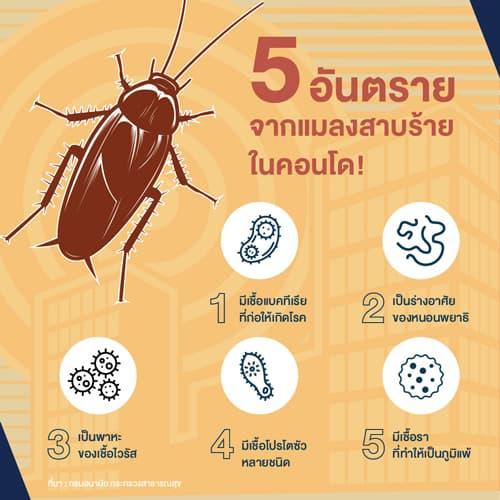 กํา จัด แมลงสาบ ใน คอน โด, วิธี กํา จัด แมลงสาบ ใน คอน โด